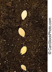 solo, sementes, vertical