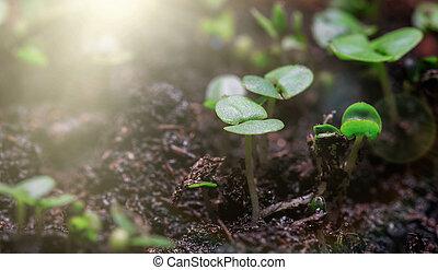 solo, verde, crescendo, grupo, brotos, saída