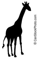 sombra, girafa