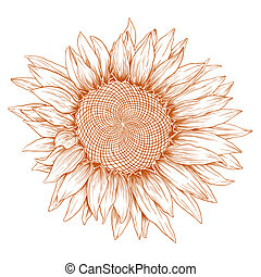 sunflower., vetorial