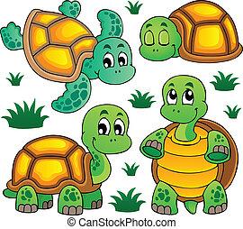 tartaruga, 1, imagem, tema