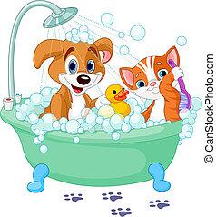 tendo, gato, cão, banho