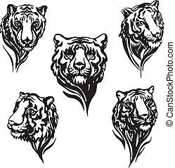 tiger, 5, cabeças