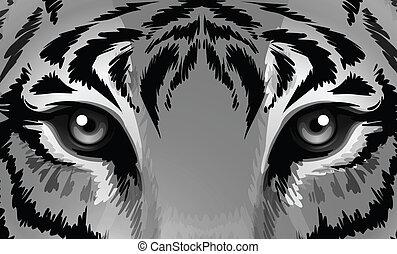 tiger, afiado, olhos