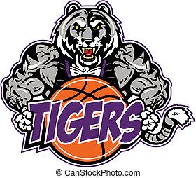 tiger, basquetebol, muscular