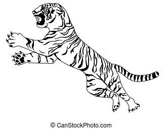 tiger, branca