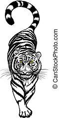 tiger, branca, pretas, crouching