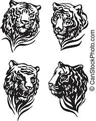 tiger, cabeças, 4