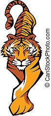 tiger, corporal, mascote, vetorial, prowling