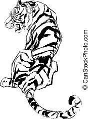 tiger, desenho