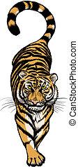tiger, ilustração, crouching