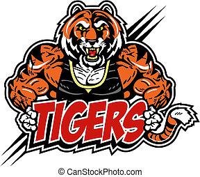 tiger, muscular, má