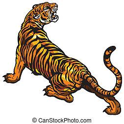 tiger, zangado