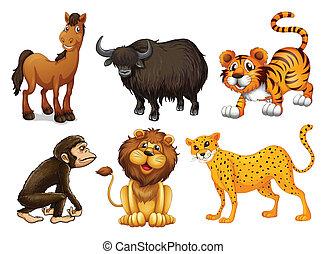 tipos, diferente, animais, quatro-four-legged