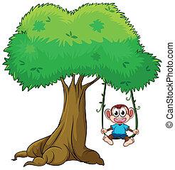 tocando, árvore, macaco, balanço