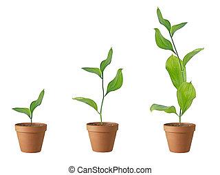 três, plantas, solo