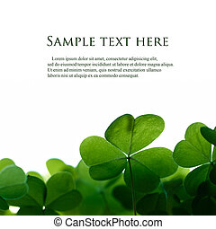 trevo, espaço, text., verde, folheia, borda