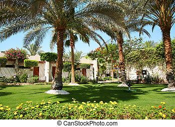 tropicais, casa, palmtree