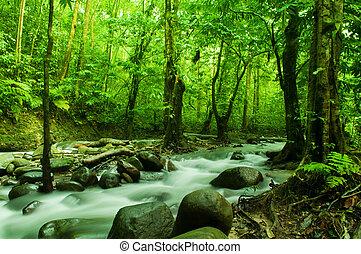 tropicais, fluxo, fluir