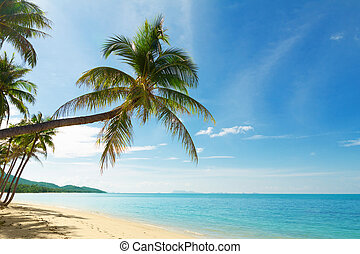 tropicais, palma, coco, praia, árvores