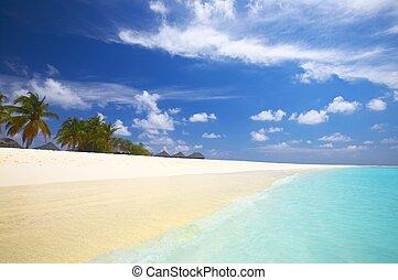 tropicais, praia índia, oceânicos