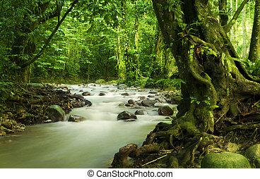 tropicais, rio, floresta tropical