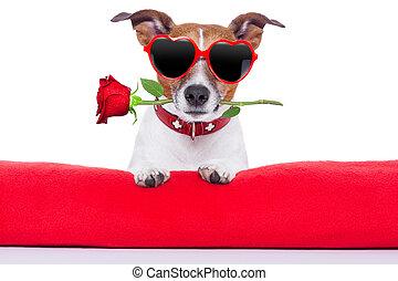valentines, cão, dia