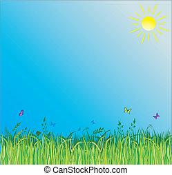 verão, capim, experiência verde