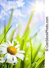 verão, capim, natural, fundo, flores, margaridas