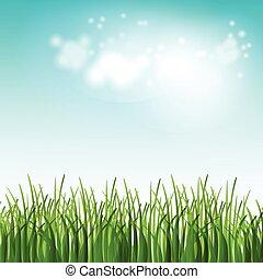 verão, flores, ilustração, campo, vetorial, grama verde