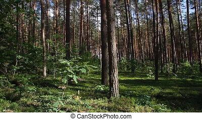 verão, floresta, panela