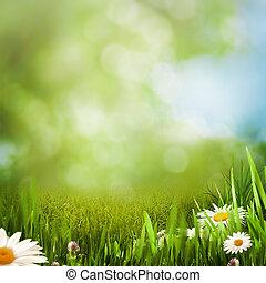 verão, prado, natural, fundos, margarida, flores