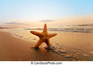 verão, praia., ensolarado, starfish