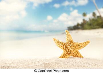 verão, praia, strafish