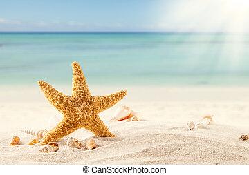 verão, praia, strafish, conchas