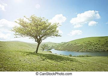 verões, dia árvore
