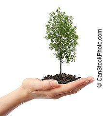 verde, árvore cinza, mão