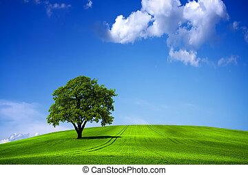 verde azul, céu, paisagem, natureza