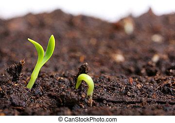 verde, chão, seedling, pequeno
