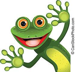 verde, feliz, rã