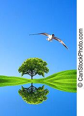 verde, natureza