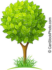 verde sai, árvore