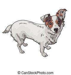 vetorial, cão, ilustração