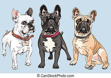 vetorial, cachorros, buldogue, jogo, francês