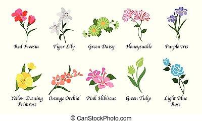 vetorial, cobrança, botanica, isolado, orgânica, natureza, jogo, flor jardim