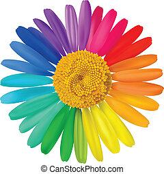 vetorial, coloridos, daisy.