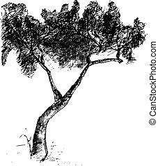 vetorial, desenhado, árvore., ilustração, mão
