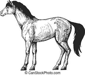 vetorial, estilo, retro, vindima, fazenda, illustration., clássicas, animals., horse.
