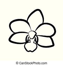 vetorial, flor, ilustração, orquídea