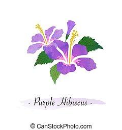 vetorial, flor, textura, aquarela, botanica, coloridos, hibisco, jardim, roxo